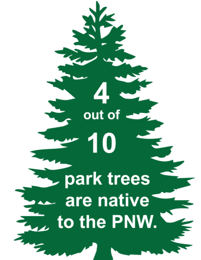 Four out of ten park trees are native to the Pacific Northwest.