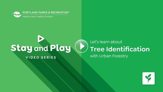 Let's learn about Tree Identification with Urban Forestry