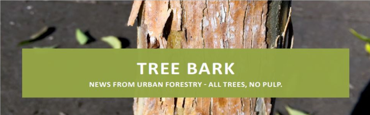 Tree Bark, News From Urban Forestry - All Trees, No Pulp
