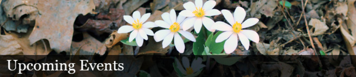 Flower, petals, ground, leaves, outdoors, leaves. Text: Upcoming Events