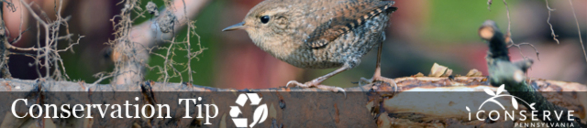 Bird, branches, tree, outside, brush, pile. Text: Conservation Tip