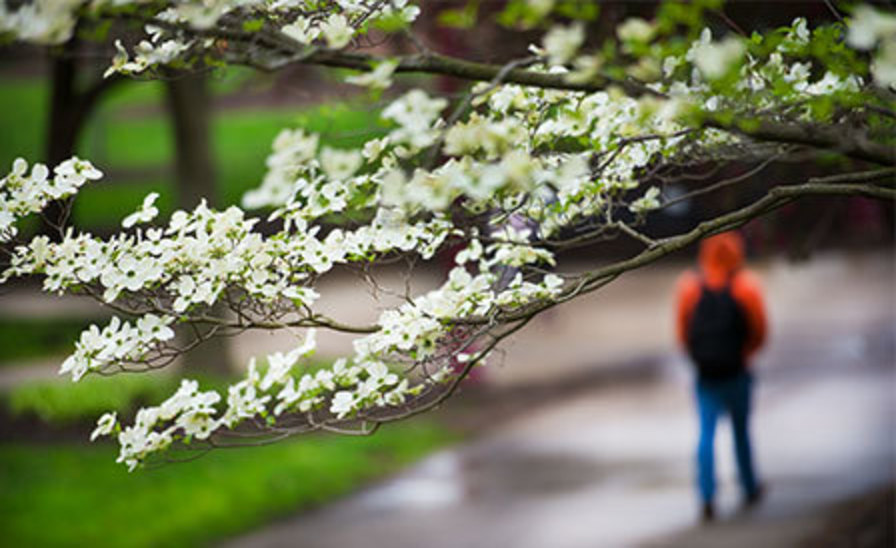 scene of student walking on campus behind a branch of dogwood