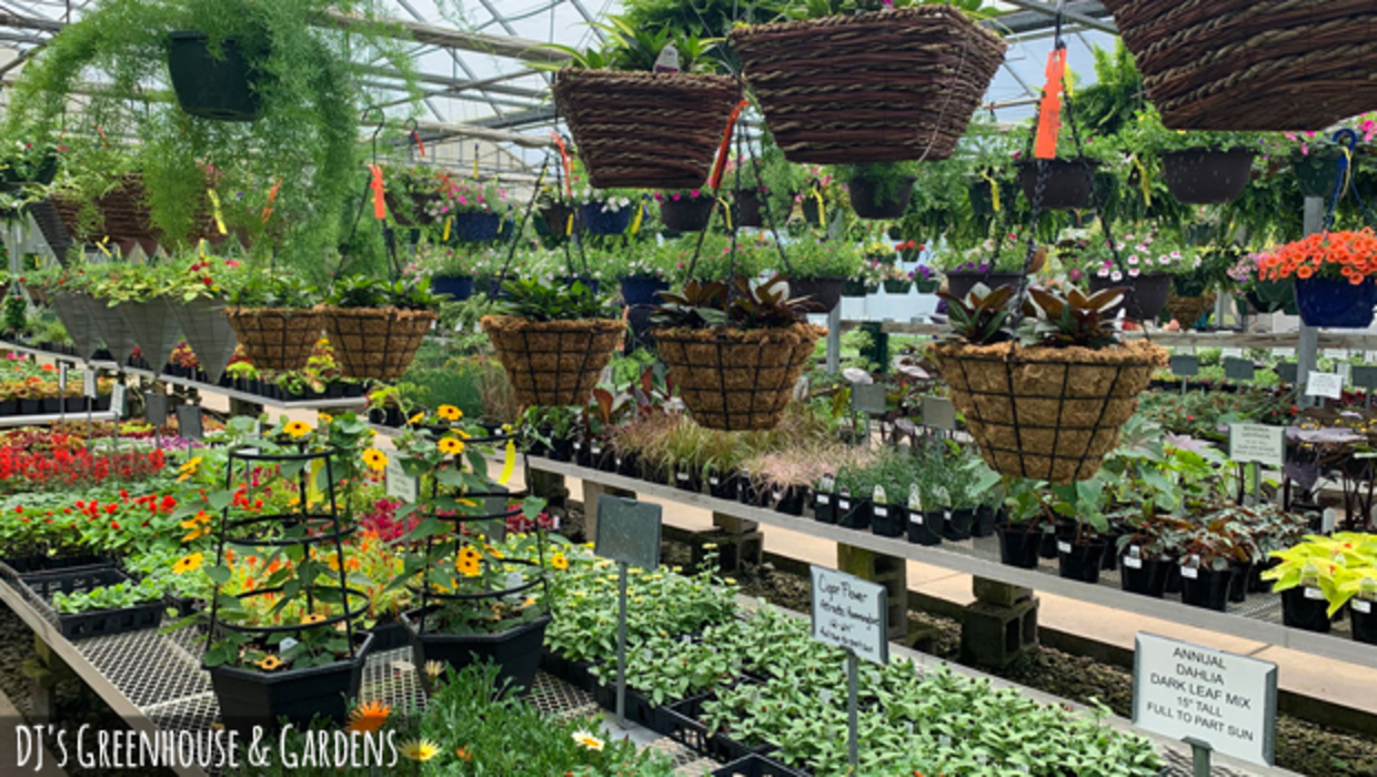 Colorful plants on display inside DJ's Greenhouse and Gardens