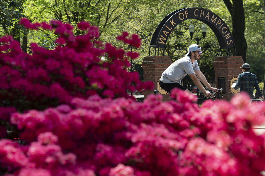 Student riding a bike past the Walk of Champions and pink flowers