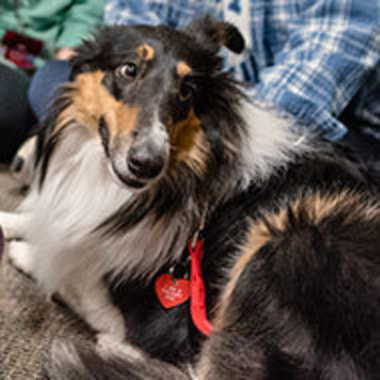 therapy dog being petted during a student de-stress event