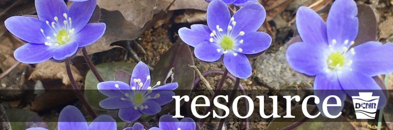 Flowers, petals, plants, ground, outside. DCNR Logo. Text: resource