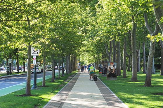 People, outside, trees, sidewalk, city, street, grass, shade