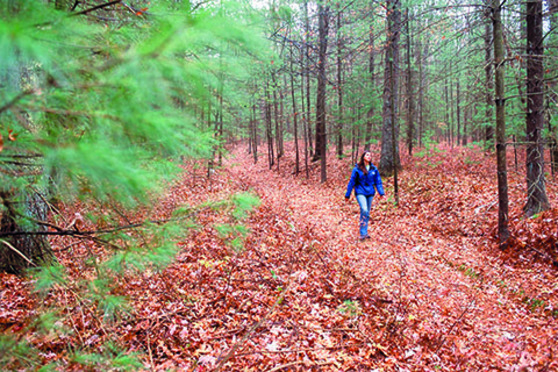 person, woods, forest, trees, walking