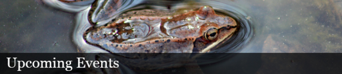 Frog, animal, water, outdoors. Text: Upcoming Events