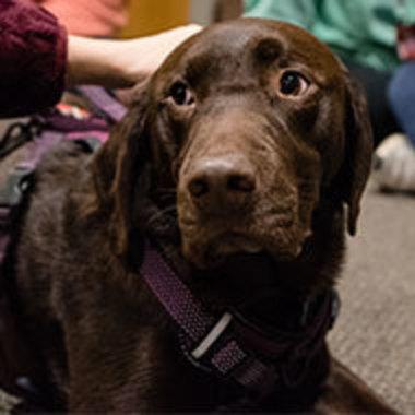 closeup of person petting dog