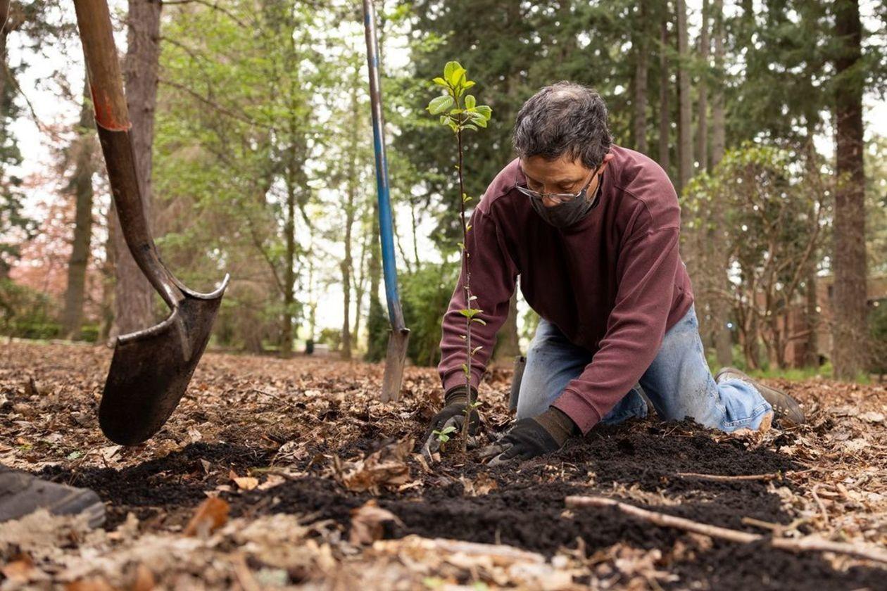 Earth Day 2021 virtual tree planting