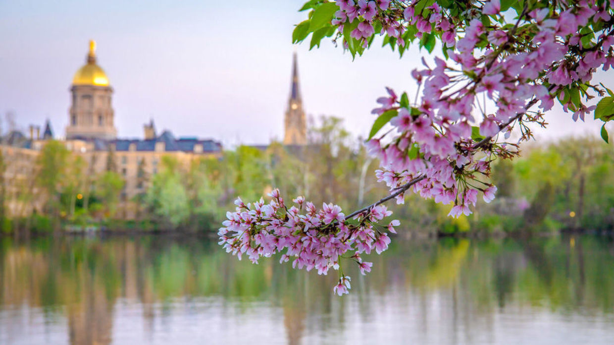 Photo of the Golden Dome, lake and flowering tree branch