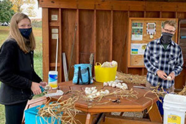 Madeline West and Jacob Hall prepare garlic that has been harvested and dried in an outdoor shelter