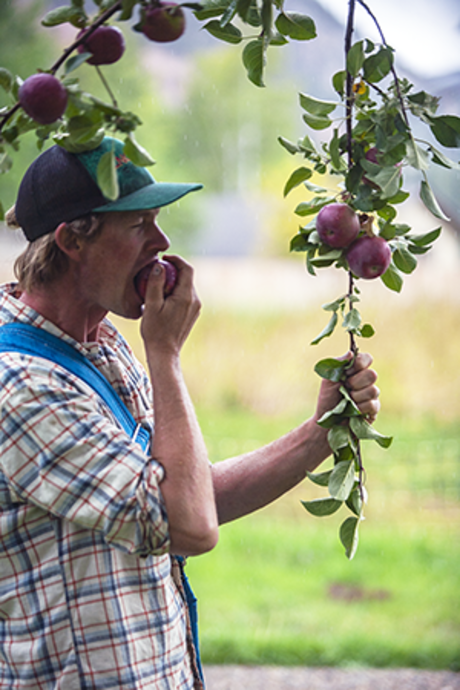 FLC alumnus Sam Perry picking an apple