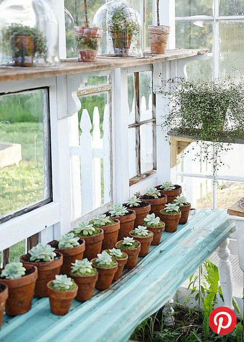 Succulents in a greenhouse