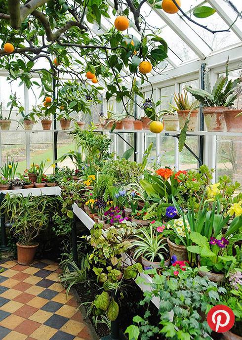 A verdant greenhouse