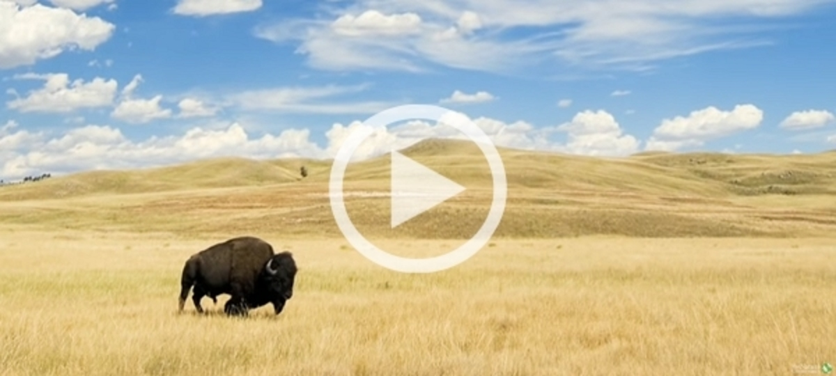 Discover America's Heartland - The Great Plains