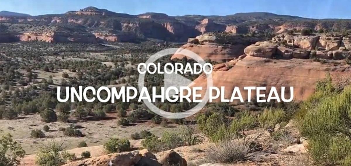 Hiking the Uncompahgre Plateau