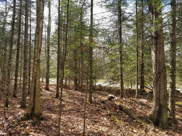 Herbster wooded lot