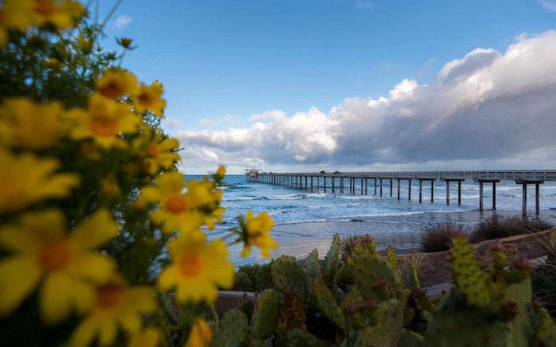 Scripps pier by the ocean with flowers in the foreground