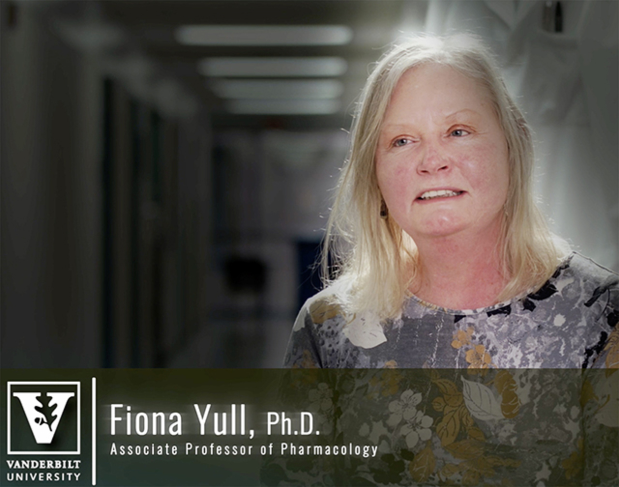 Screenshot of the interview with faculty member Fiona Yull, Ph.D., Associate Professor of Pharmacology. A banner with Yull's name, appointment, and the Vanderbilt logo is overlaid over the bottom of the screen. Yull occupies the right side of the screen. There is nothing in the foreground on the left side.