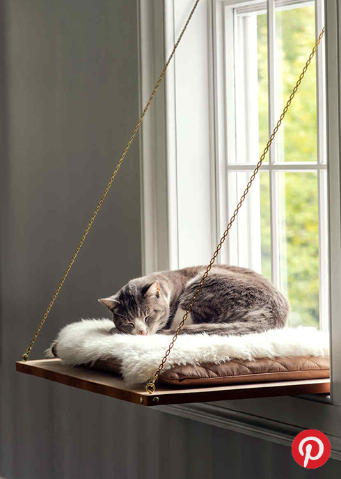 A cat on a window bed