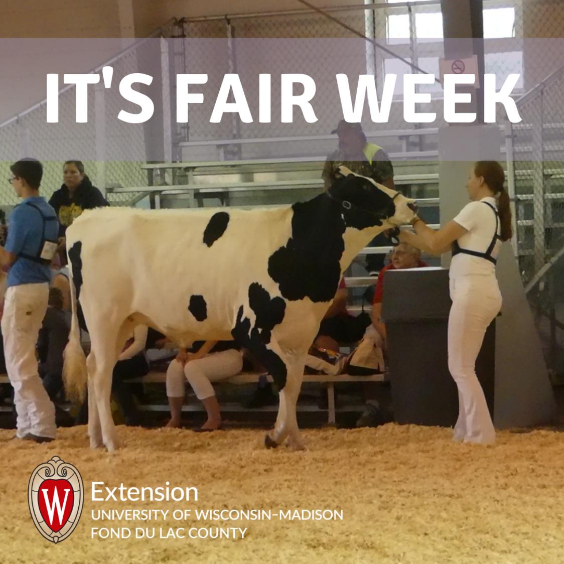 fair dairy show