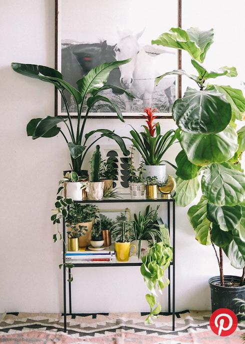 Lots of plants inside