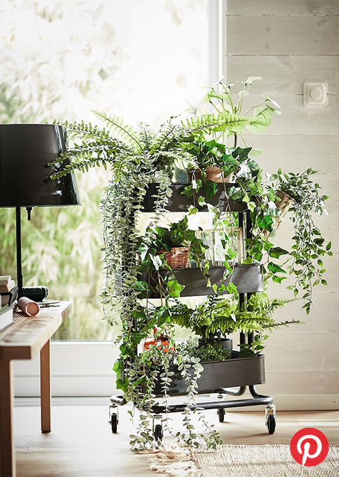 Plants on a small cart