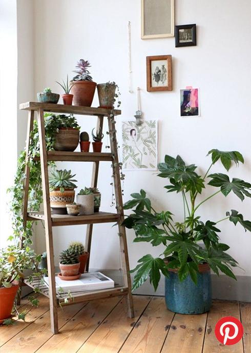 Plants on a wooden shelf