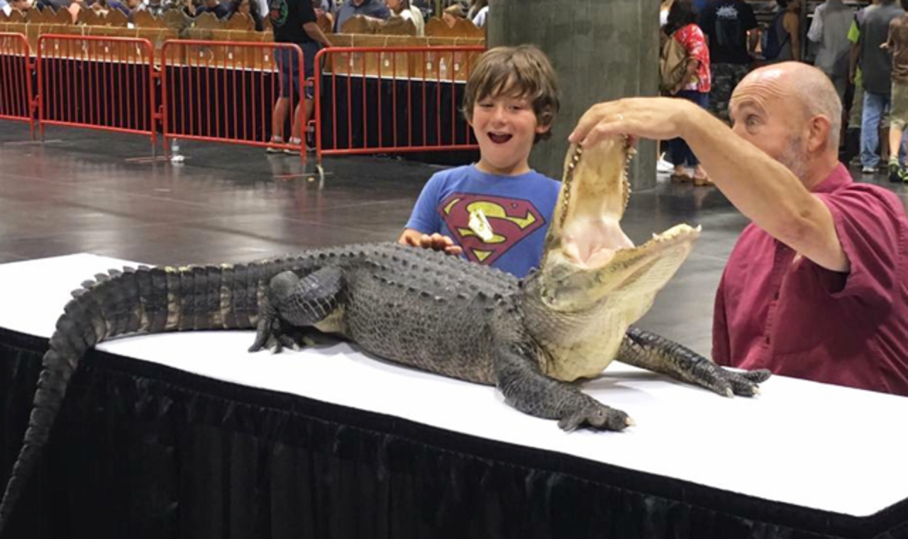 Man opening the mouth of an alligator infront of a young kid