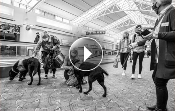 PDX travelers petting and snuggling with DoveLewis service dogs.