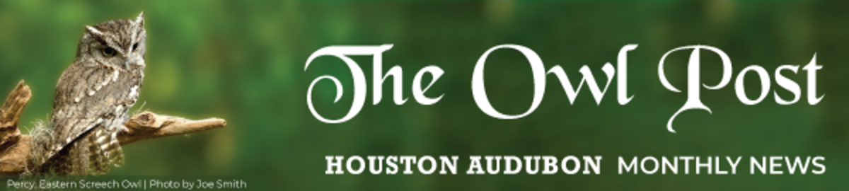 The Owl Post   Houston Audubon Monthly News