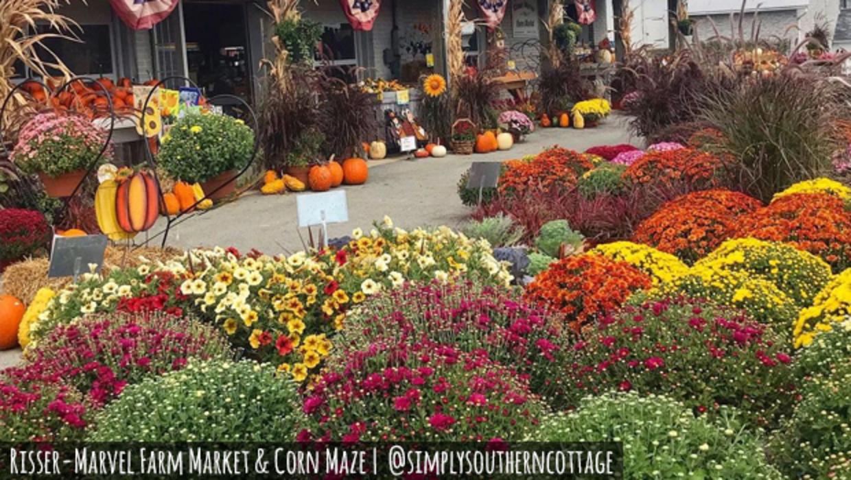A gorgeous display of autum plants and pumpkins outside the Risser-Marvel farm market. Photo credit simply southern cottage on Instagram