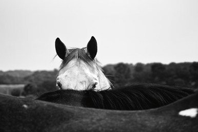 face of the horse