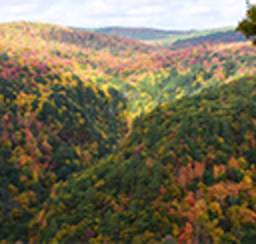 A breathtaking scenic gorge brimming with colorful fall foliage