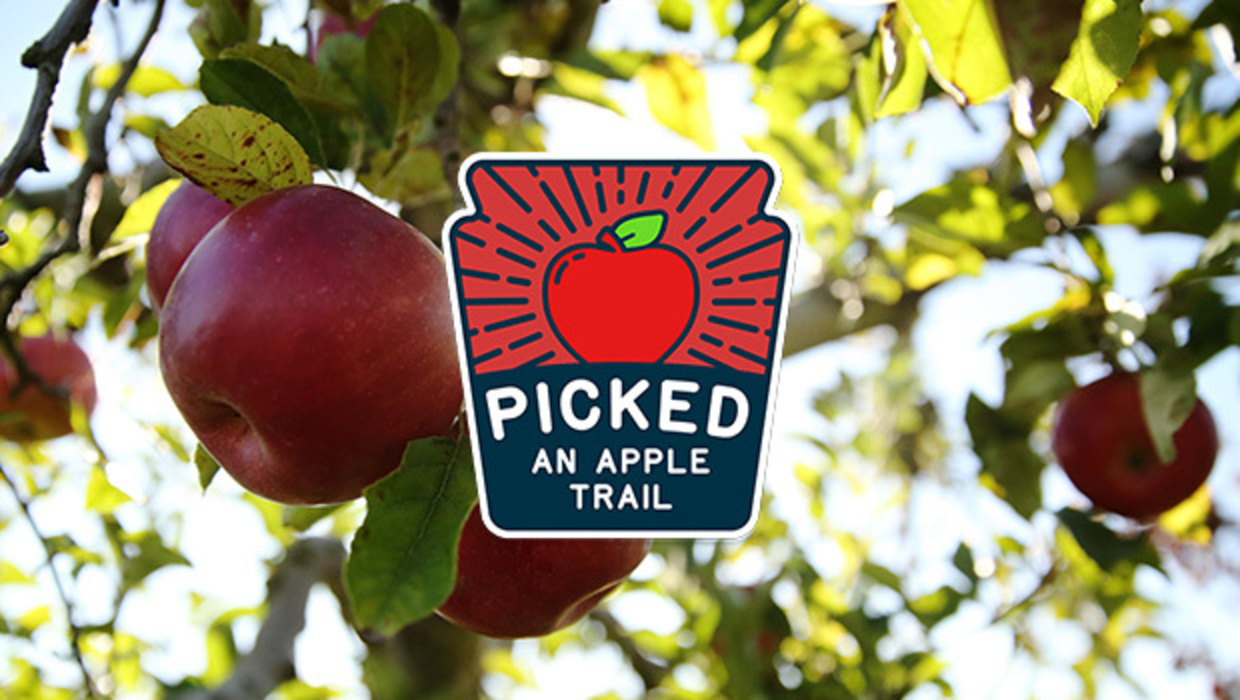 Picked: An Apple Trail logo over an image of red, ripe apples hanging fromt the tree